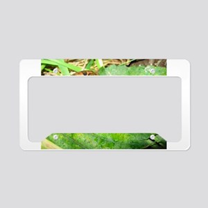 Froggy License Plate Holder