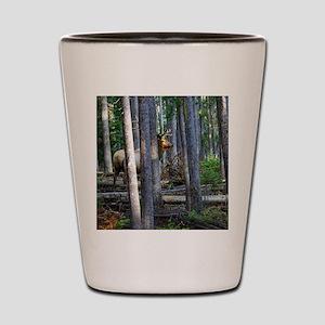 Bull Elk in forest Shot Glass