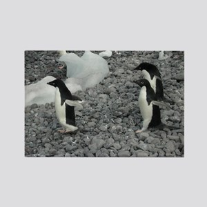 Adelie Penguins Rectangle Magnet