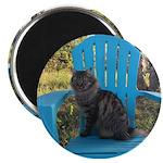 adirondack cat Magnets