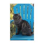 adirondack cat Posters