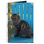 adirondack cat Journal