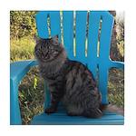 adirondack cat Tile Coaster