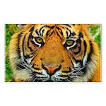 The Last Tiger? Sticker (Rectangle 50 pk)