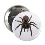 Life Size Funnel Web Spider Button