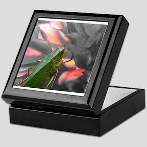 The Fire Bug Keepsake Box