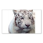 Disappearing Tigers Sticker (Rectangle 10 pk)