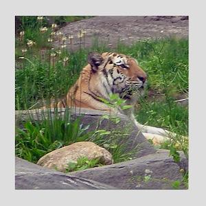 tiger 5 Tile Coaster