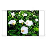 Field of Calla Lily Flow Sticker (Rectangle 10 pk)