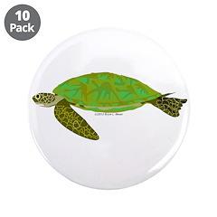 Green Sea Turtle 3.5