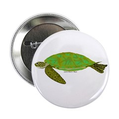 Green Sea Turtle 2.25