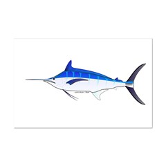 Blue Marlin fish Posters