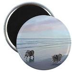 Keeshonds at the Seashore Magnet