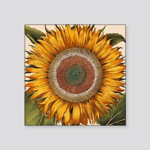 "Basilius Besler Sunflower Square Sticker 3"" x 3"""