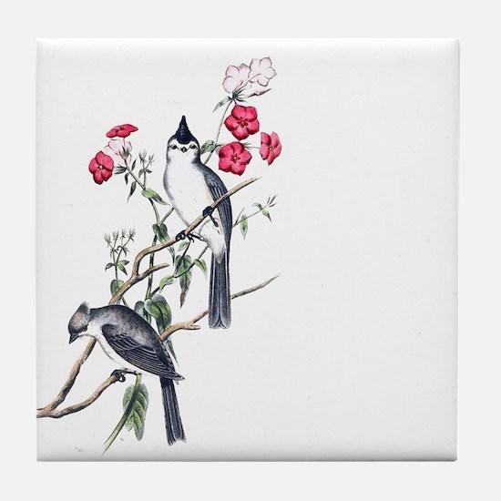 BLACK-CRESTED TITMOUSE Tile Coaster