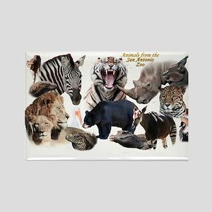 SA Zoo Magnets
