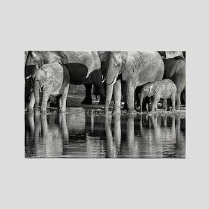 Elephant Reflections Rectangle Magnet