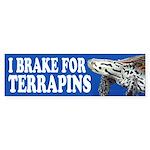 Terrapin Bumper Sticker