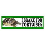 Tortoise Bumper Sticker