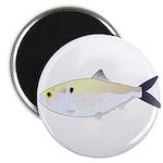 Menhaden Bunker fish Magnet