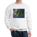 Reflected Light from the River Sweatshirt