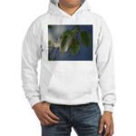 Reflected Light from the River Hooded Sweatshirt