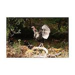 Wild Turkey Mini Poster Print