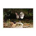 Wild Turkey Mini Poster Print