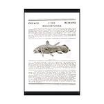 Coelacanth Reward 11x17 Print