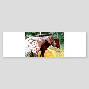 Appaloosa Horses Sticker (Bumper)