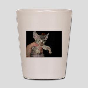 devon rex kitten Shot Glass
