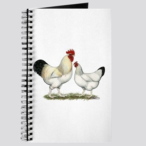 Indian River Chickens Journal
