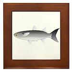 Black Mullet fish Framed Tile
