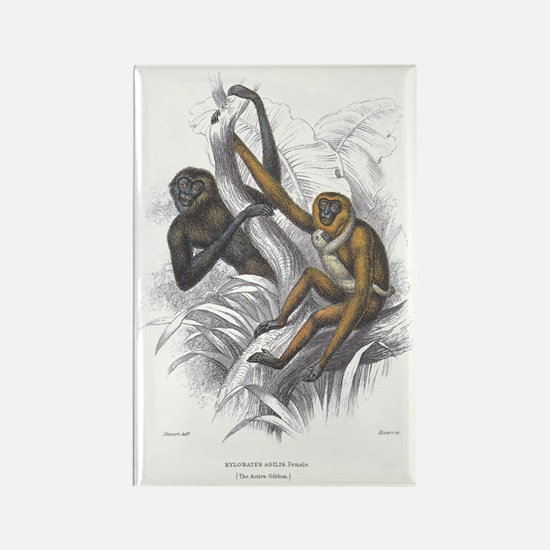 Gibbon Ape Monkey Rectangle Magnet