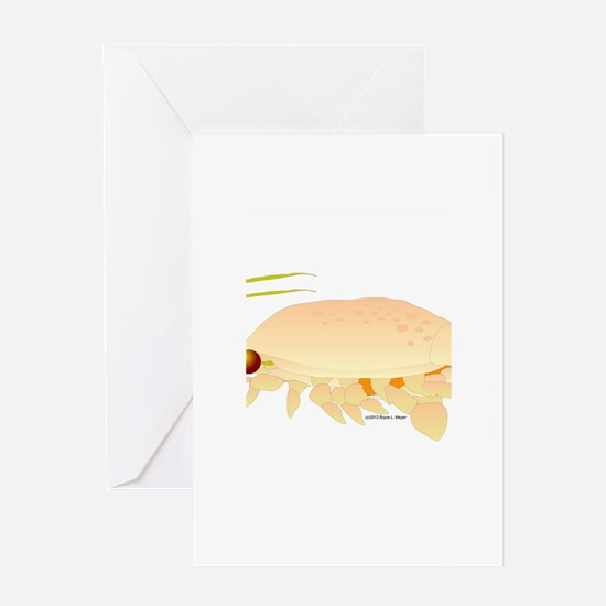 Mole Shrimp Sand Crab Sand Flea Greeting Card