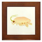 Mole Shrimp Sand Crab Sand Flea Framed Tile