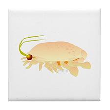 Mole Shrimp Sand Crab Sand Flea Tile Coaster
