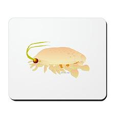 Mole Shrimp Sand Crab Sand Flea Mousepad