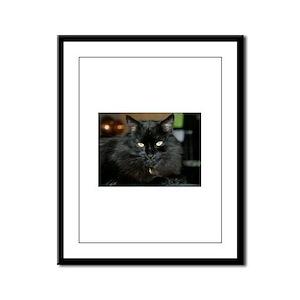 Charlie the black Maine Coon Cat Framed Panel Prin