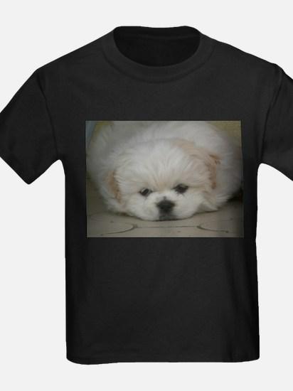 Pekingese Puppy T