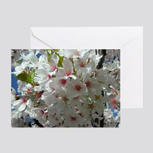 Cherry Blossoms 3 Greeting Cards (Pk of 10)