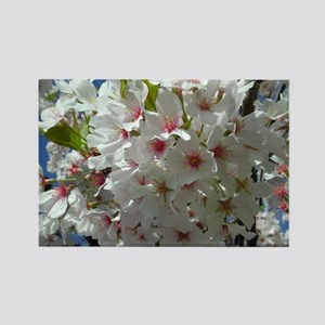 Cherry Blossoms 3 Rectangle Magnet