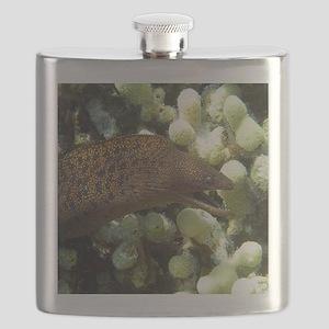 Moray Eel Flask