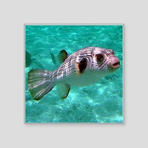 "Striped Puffer Fish Square Sticker 3"" x 3"""