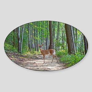 Beautiful doe in forest Sticker (Oval)