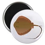 Stingray (Southern) ray Magnet