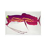 Deep Sea Dragonfish Rectangle Magnet (10 pack)