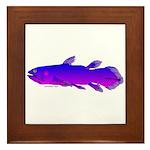 Coelacanth Framed Tile