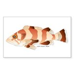Copper Rockfish fish Sticker (Rectangle 50 pk)