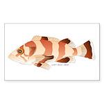 Copper Rockfish fish Sticker (Rectangle 50 pk)